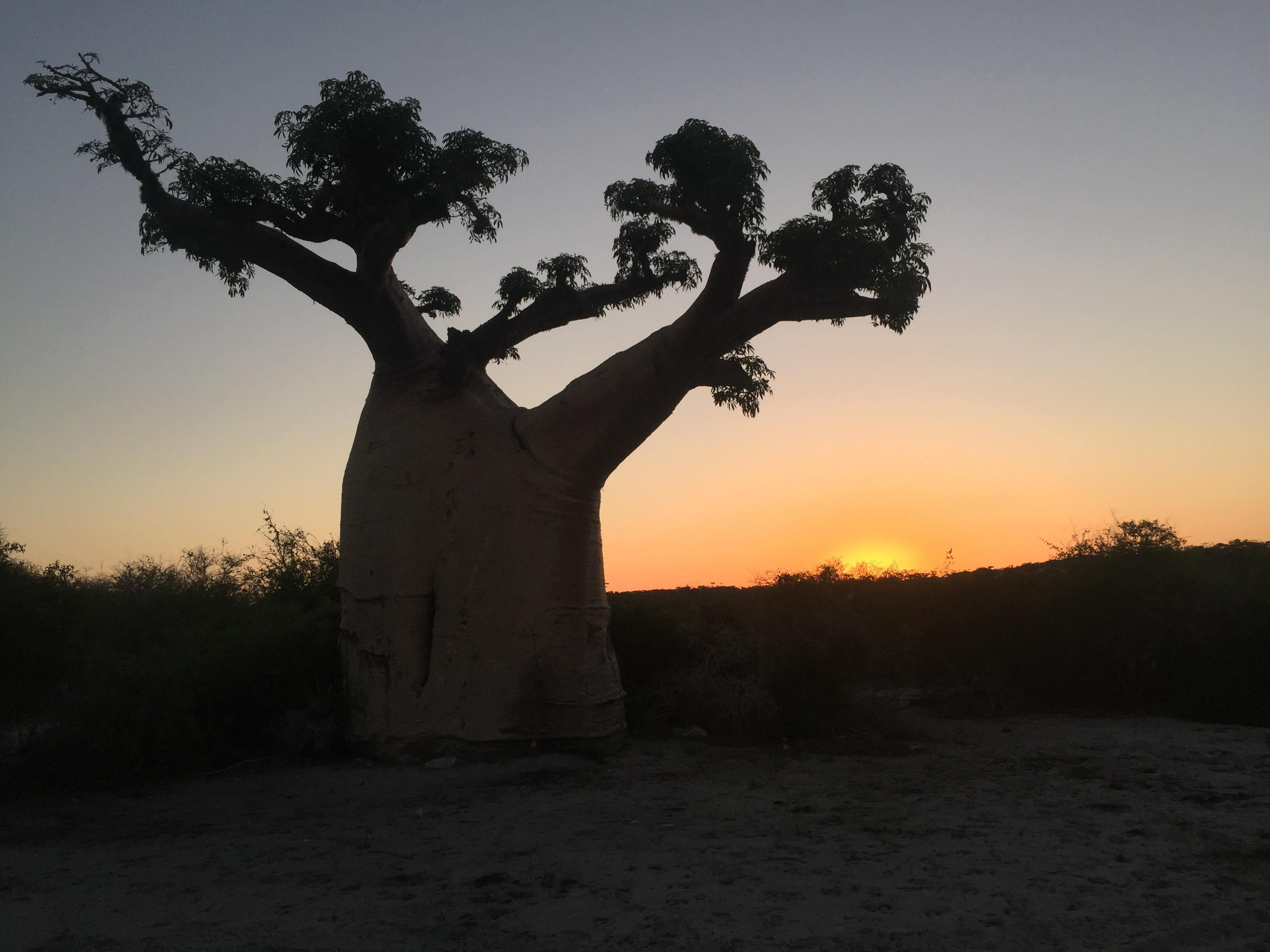 MADAGASCAR FLAMBOYANT TOURS