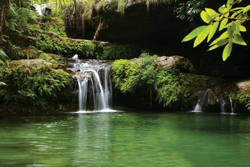 Piscine_Naturelle_-_Natural_pool